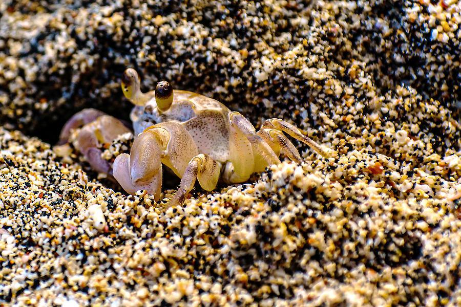 Little Sand Crab by John Bauer
