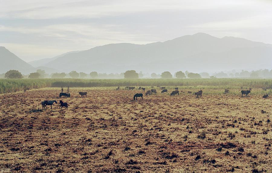 Livestock On A Farm Land Near Jacmel Photograph by Cultura Exclusive/philip Lee Harvey