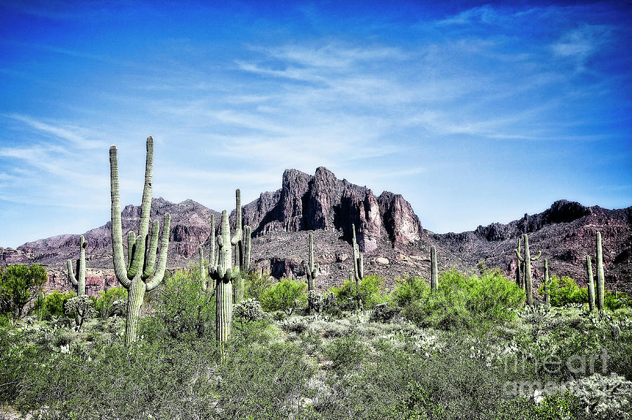 Living Desert by Scott Kemper