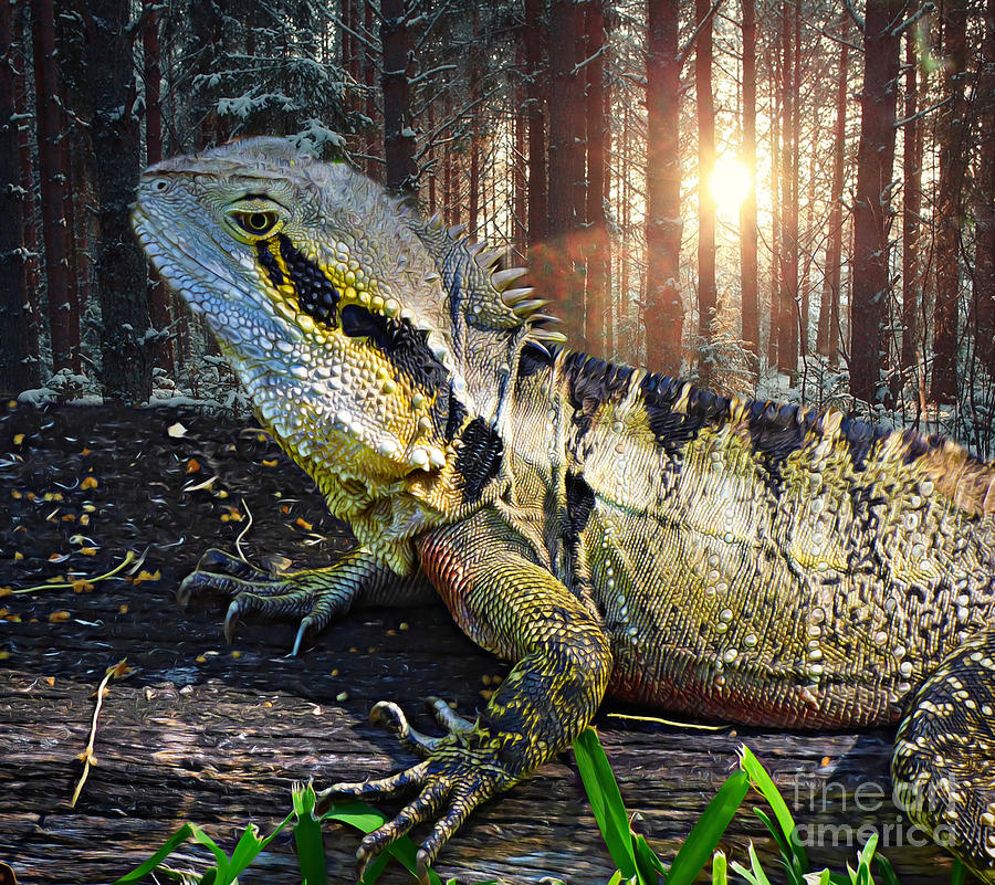Lizard in the Forest. by Trudee Hunter