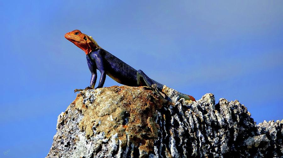 Animal Photograph - Lizard Lips by Rick Lawler