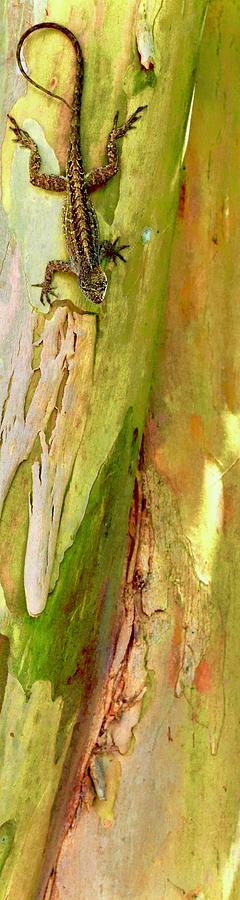 Lizard Photograph - Barking Lizard by Debra Grace Addison