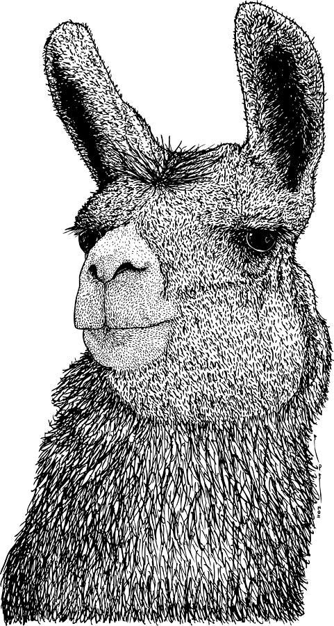 Llama Digital Art by Drawings & Artwork By Karl Addison