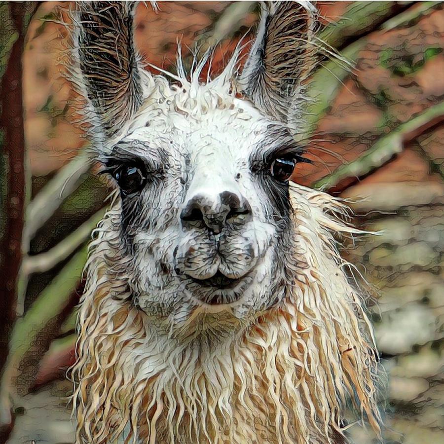 Llama by Sarah Hanley