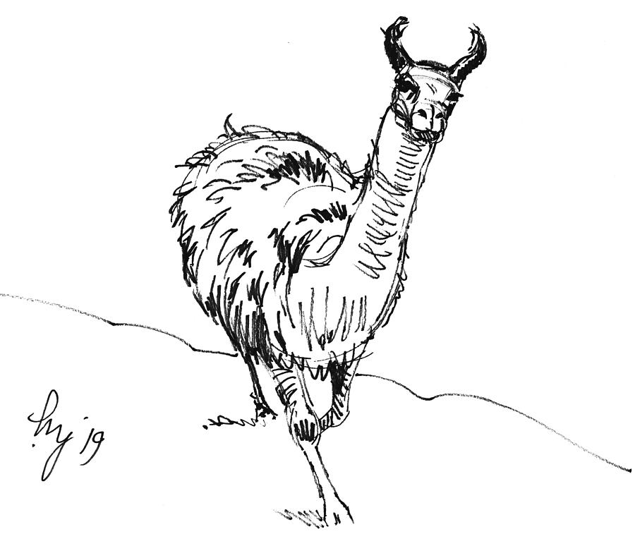 Llama walking drawing by Mike Jory