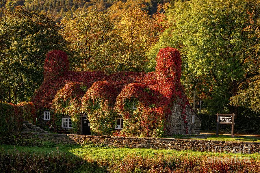 Tu Hwnt I'r Bont Photograph - Llanrwst Tea Room Autumn by Adrian Evans