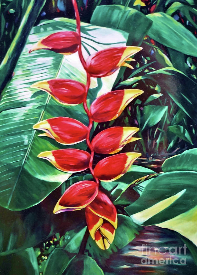 Cayman Painting - Lobster Claw Heliconia by John Clark