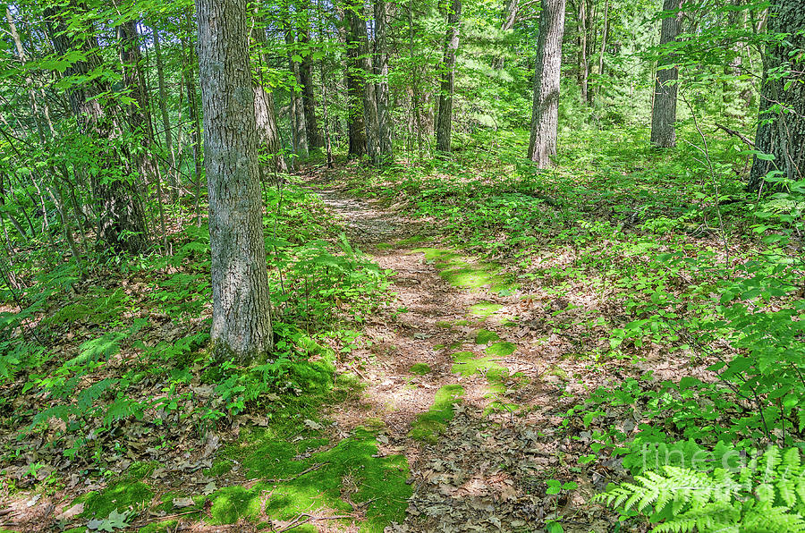 Loda Lake Trail Through the Woods by Sue Smith
