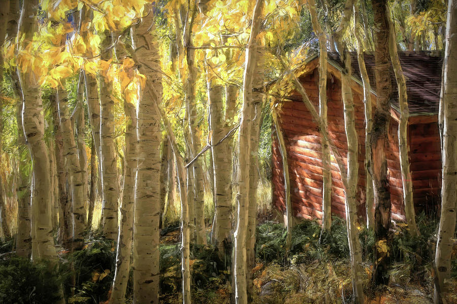 Fishlake National Forest Photograph - Log Cabin In The Woods by Donna Kennedy