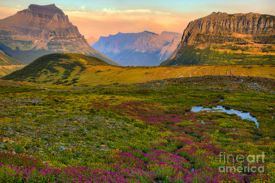 Logan Pass Wildflower Blanket by Adam Jewell