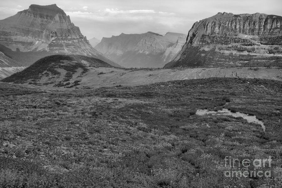 Logan Pass Wildflower Blanket Black And White by Adam Jewell