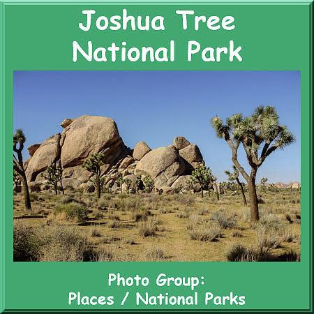 Logo Joshua Tree National Park by NaturesPix