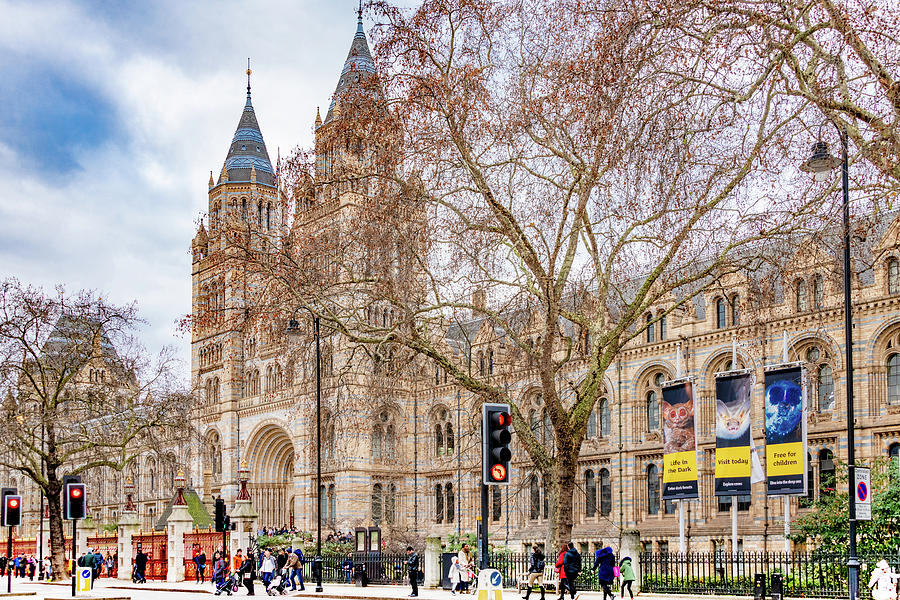 London's Museum of Natural History by Marcy Wielfaert