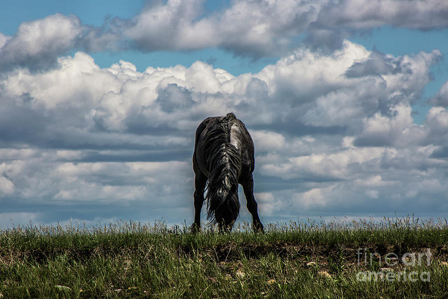 Lone Black by Kathy McClure