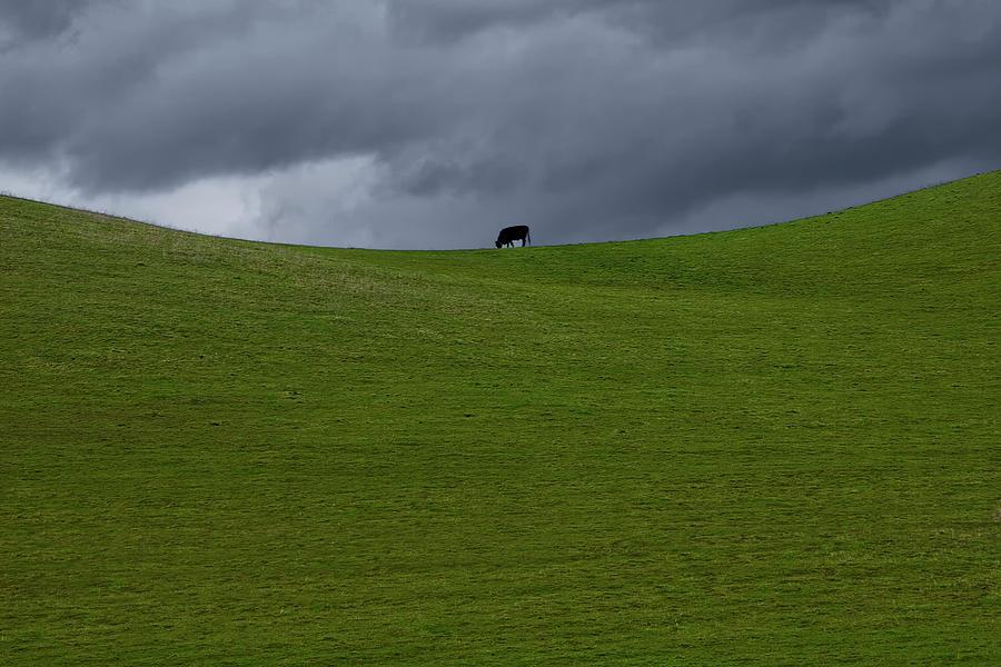 Lone Grazer Photograph
