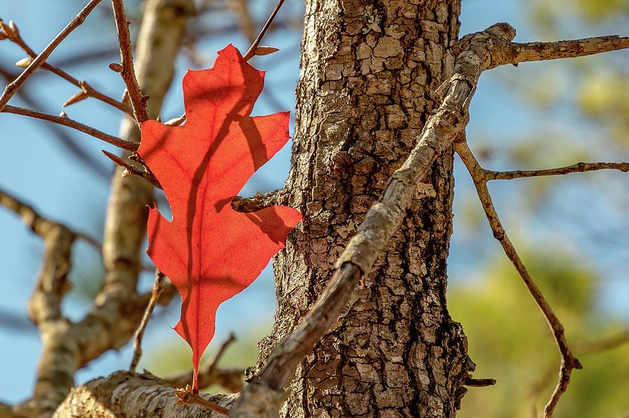 Lone Leaf by Ree Reid