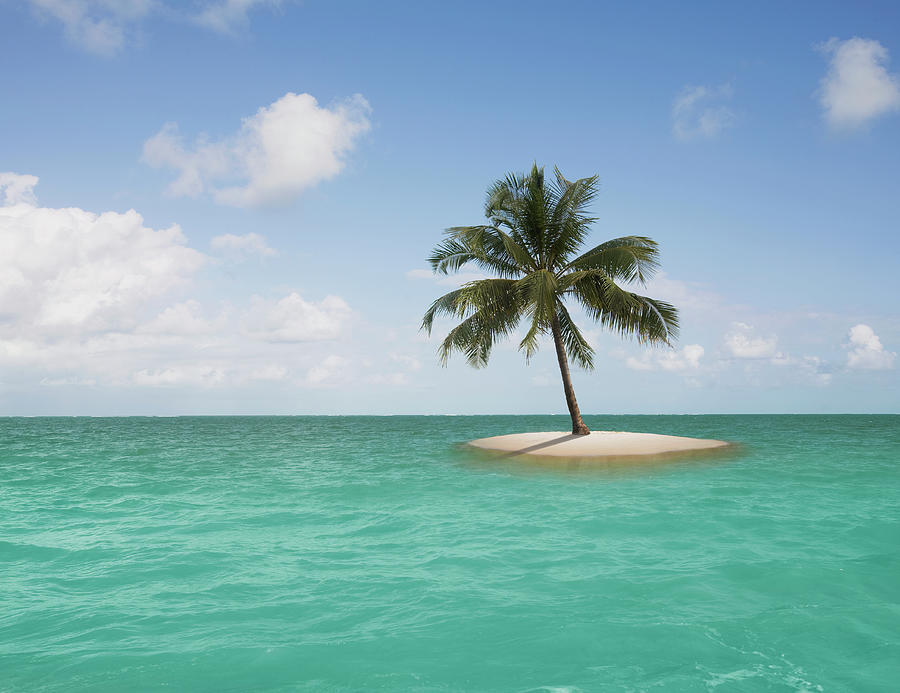 Lone Palm Tree On Small Island Photograph by John Lund