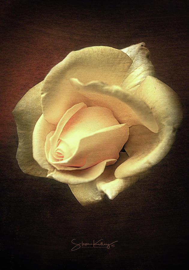 Lone Rose by Steve Kelley