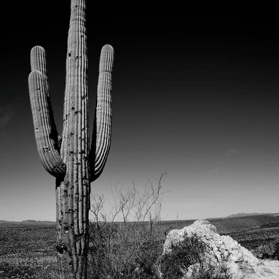 Lone Saguaro Square by Chad Dutson