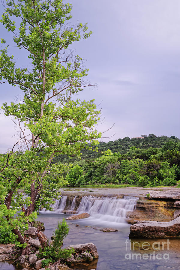 Lone Sycamore Contemplation At Link Falls - Bull Creek Greenbelt Austin Texas Hill Country Photograph