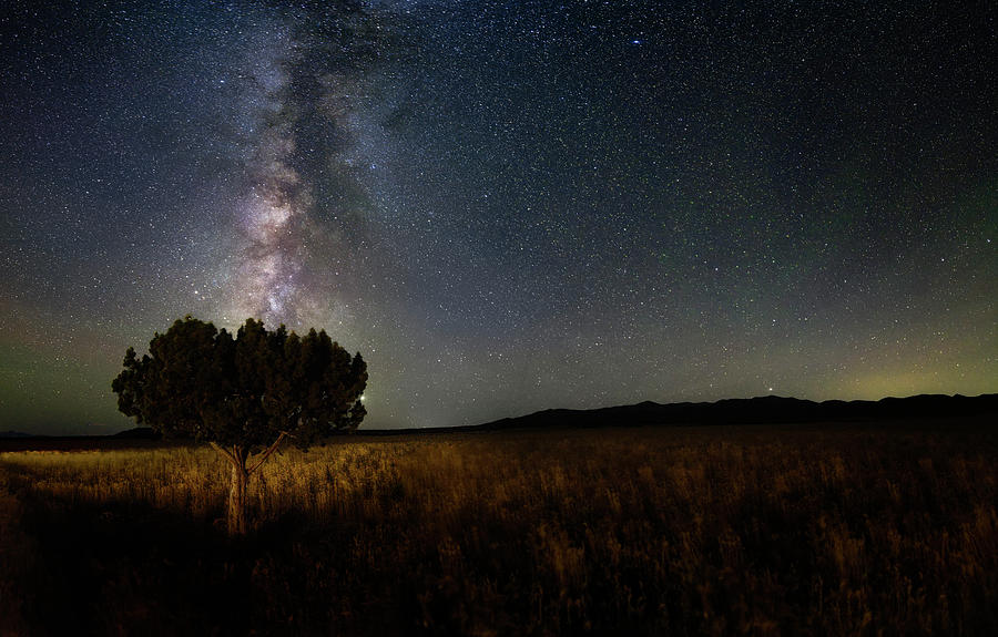 Lone Tree and Milky Way by Michael Ash