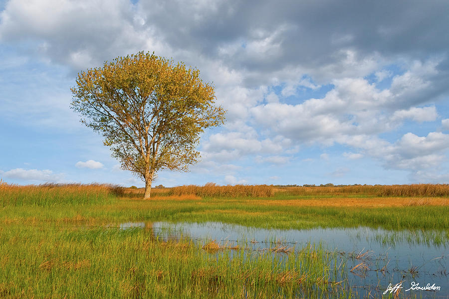 Lone Tree by a Wetland by Jeff Goulden