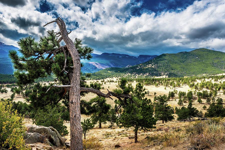 Lone Tree II by James L Bartlett