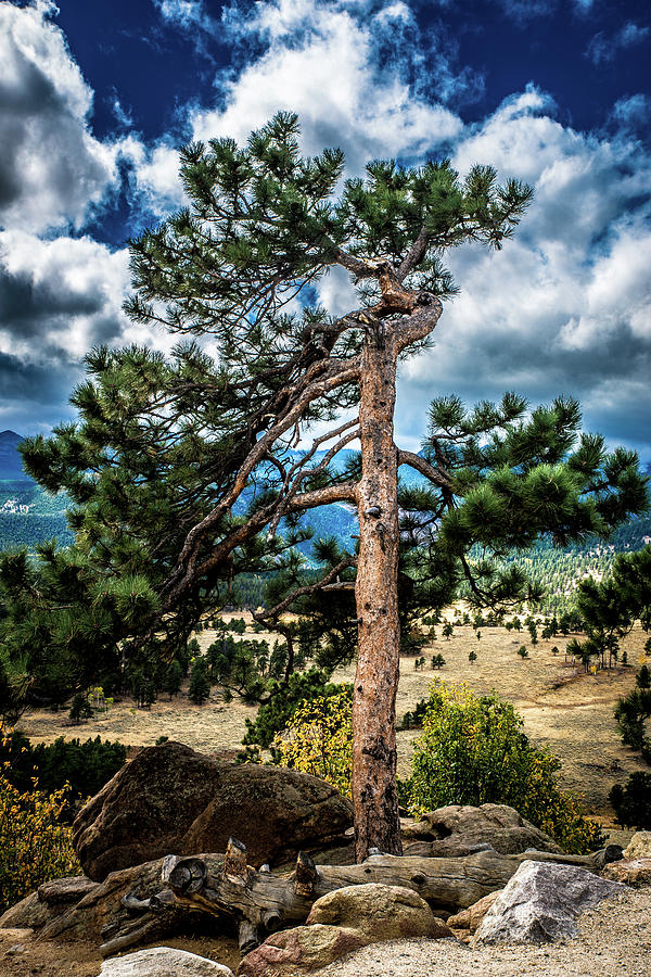 Lone Tree by James L Bartlett