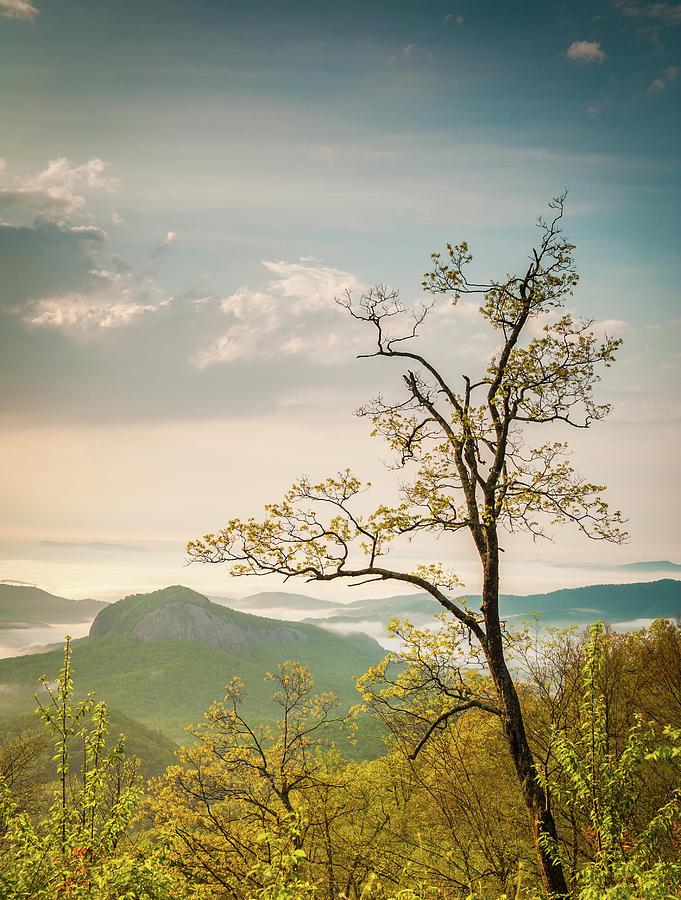Lone Tree by Joye Ardyn Durham