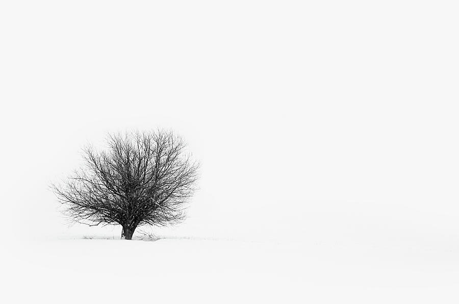 Lone Tree Photograph by Jrj-photo