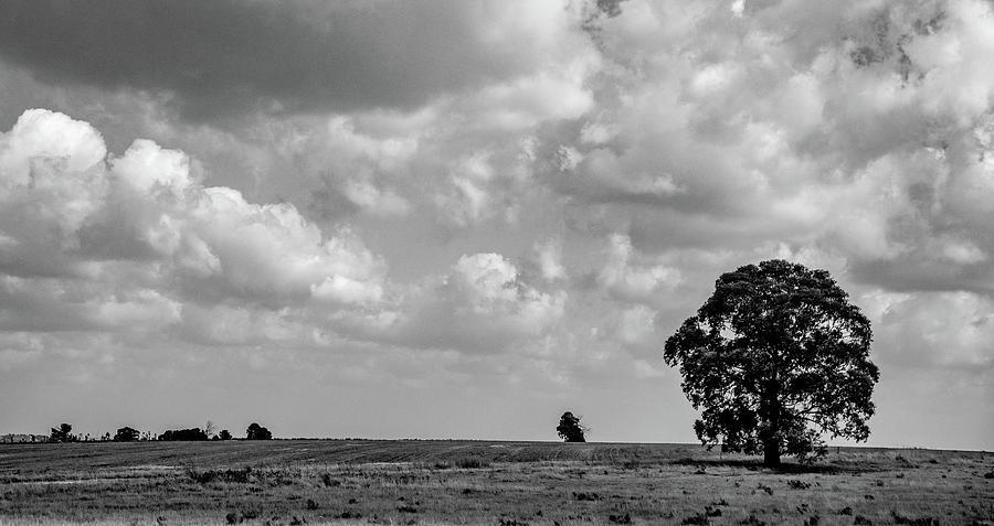Lone Tree Landscape by Marcy Wielfaert