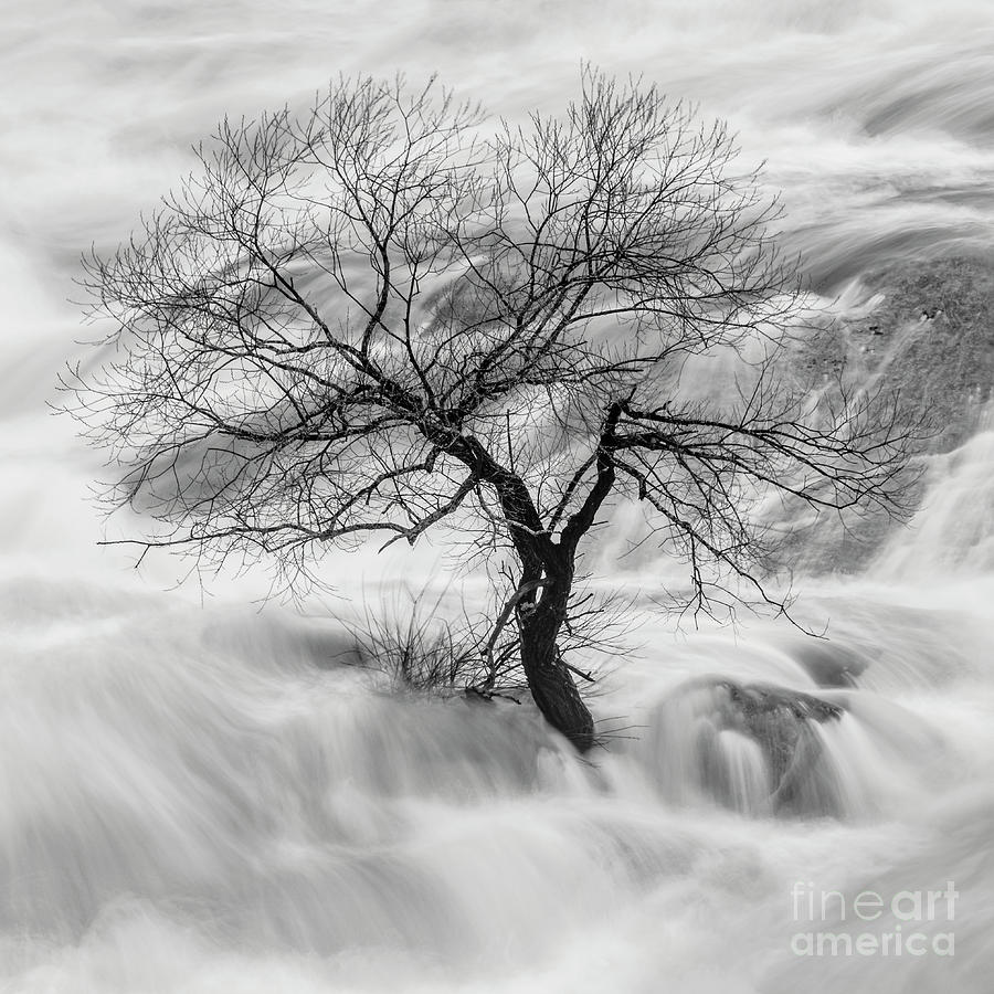 Lone Tree - Lisbon Falls by Craig Shaknis