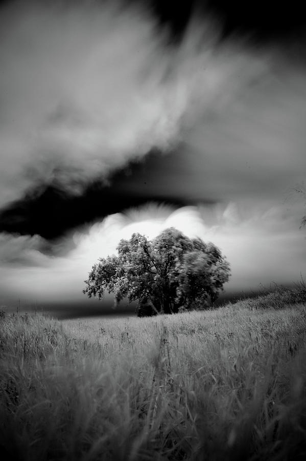 Lone tree on a hill by Trinidad Dreamscape