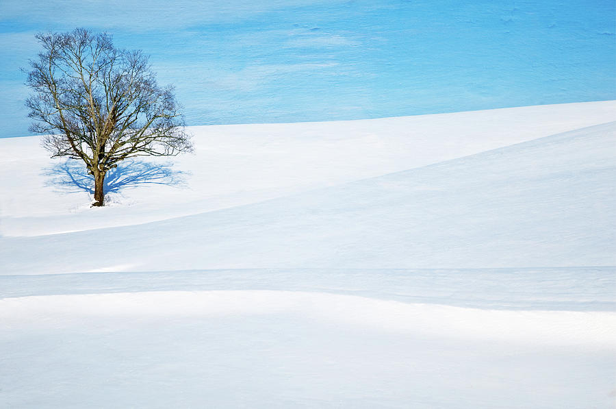 Lone Tree On Snow Mountain Photograph by Chuck Robinson Photography