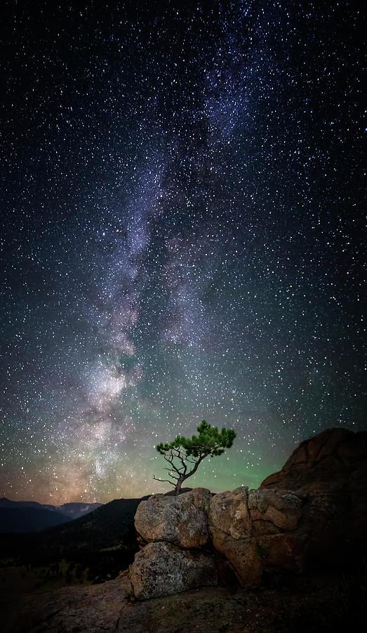 Lone Tree Under the Milky Way by David Soldano