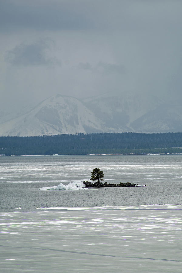 Lone Tree Yellowstone Lake by Bruce Gourley