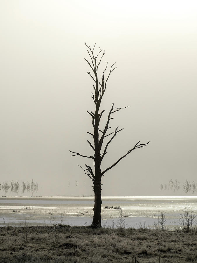 Lonely dead tree by Anders Kustas