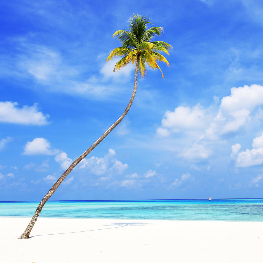 Lonely Palm On Tropical Beach Photograph by Skynesher
