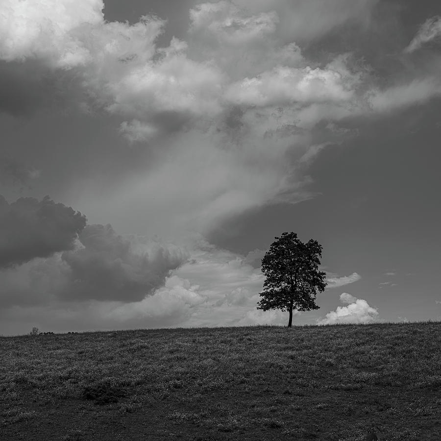 Lonely Summer Tree by Patrick M Lynch