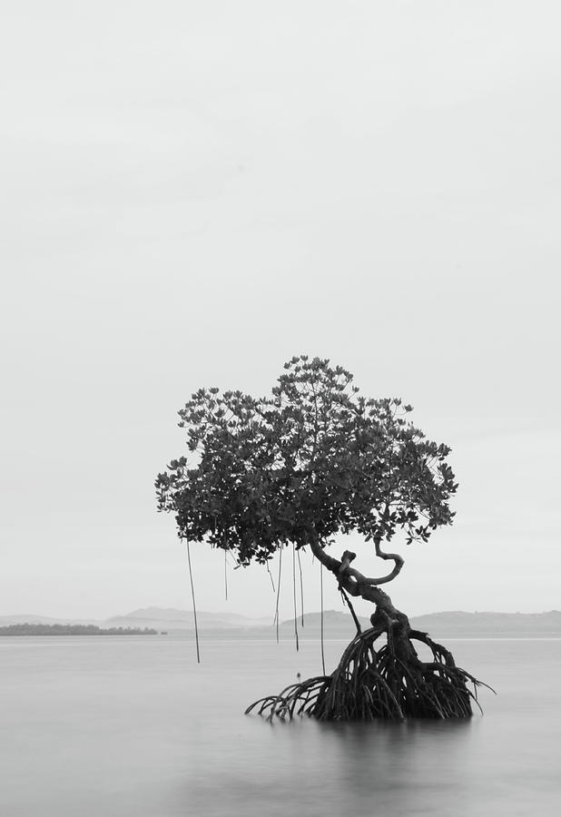 Lonely Tree Photograph by Ed Rojas