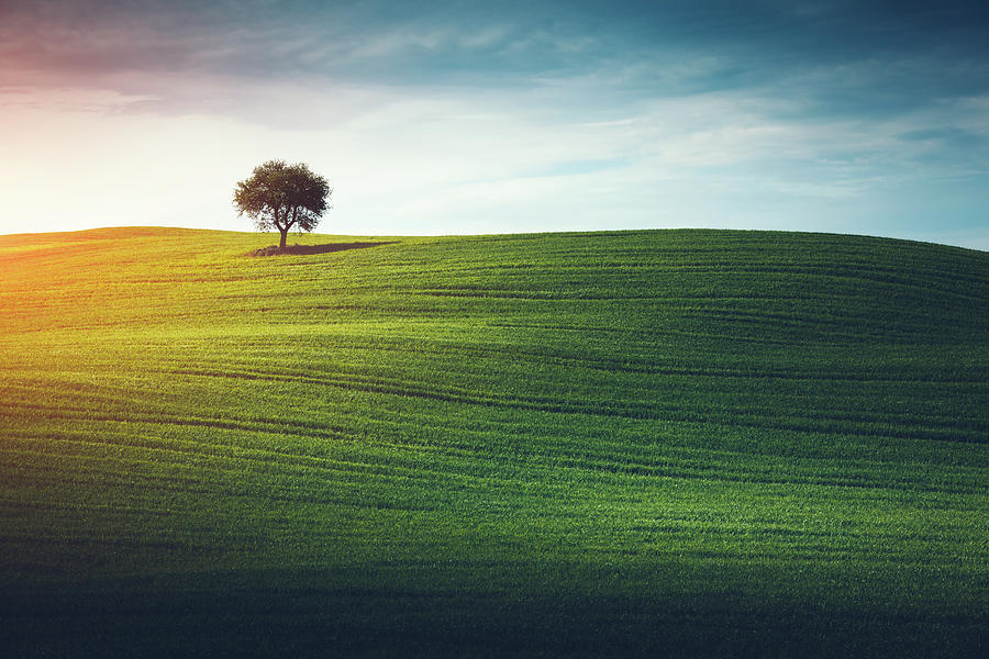 Lonely Tree In Tuscany Photograph by Borchee