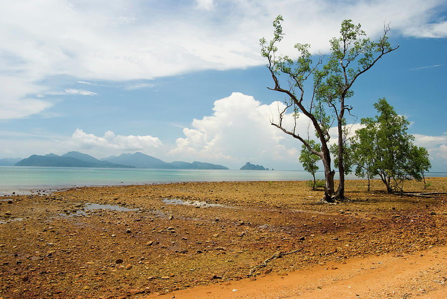 Lonely Tree On A Red Rock Beach Photograph by Chrisp0