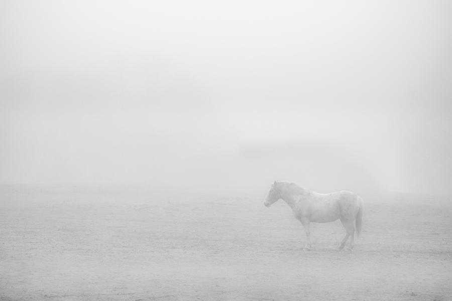 Lonesome Horse by Art Shack