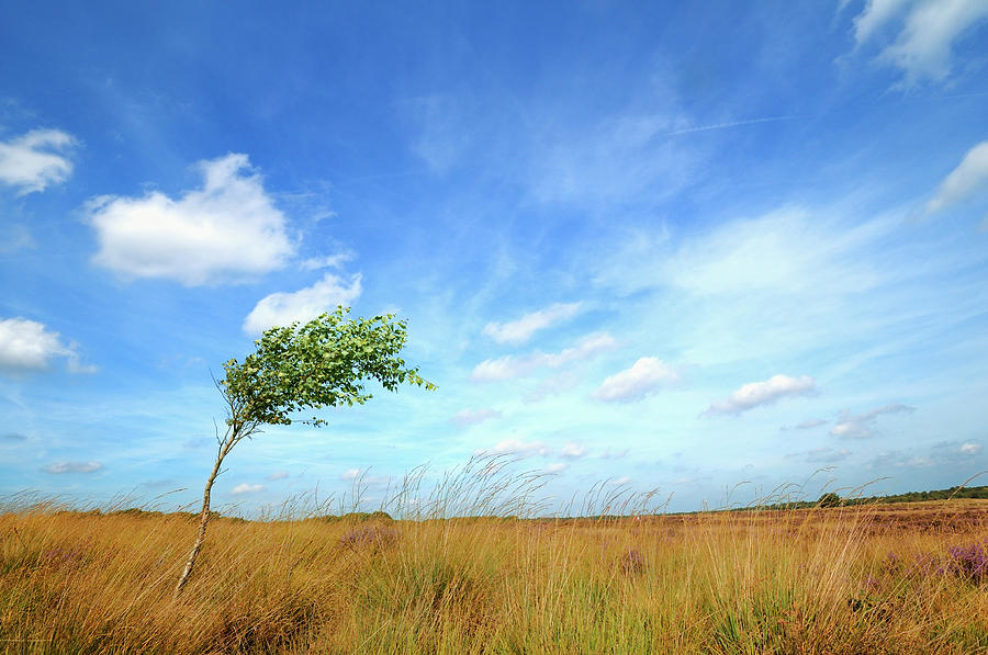 Lonesome Tree Swept By The Wind Photograph by Nikitje