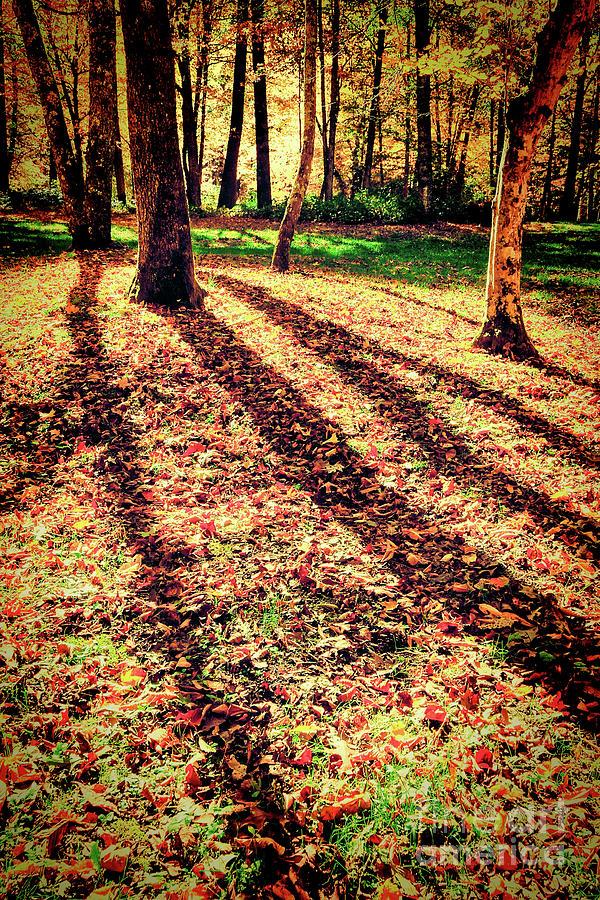 Autumn Digital Art - Long Autumn Shadows In The Blue Ridge by Dan Carmichael