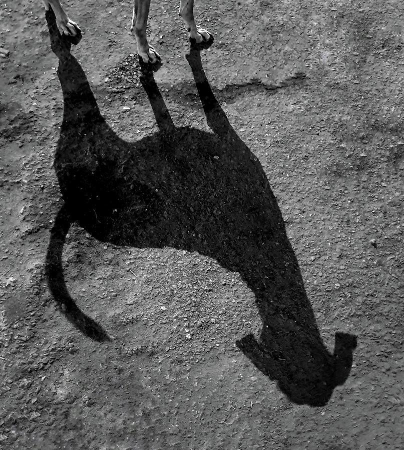Long Dog Shadow by Prakash Ghai