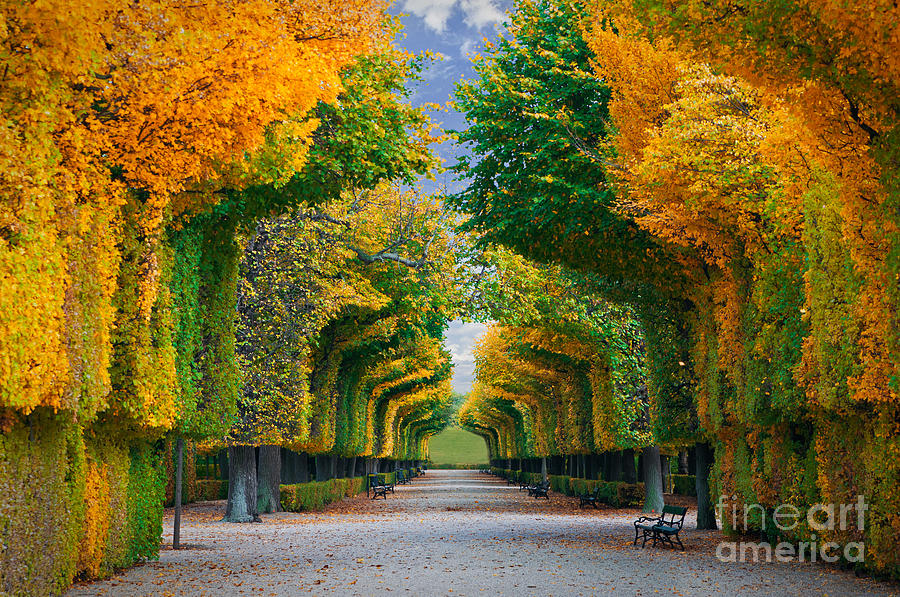 Forest Photograph - Long Road In Autumn Park by Badahos