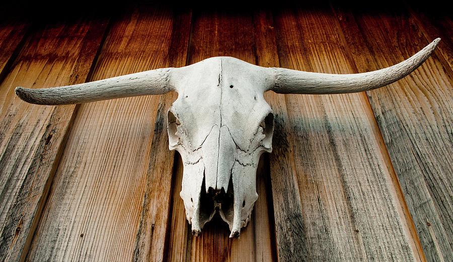 Longhorn Skull Photograph by Jon Putsch Photography