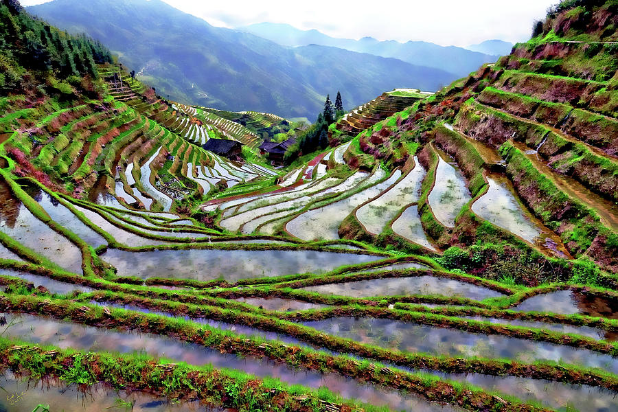 Rice Photograph - Lonji Rice Terraces by Rick Lawler