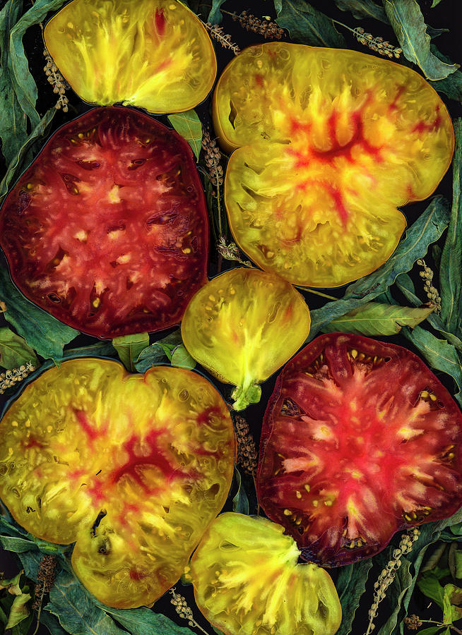 Look Inside Heirloom Tomatoes by Sarah Phillips